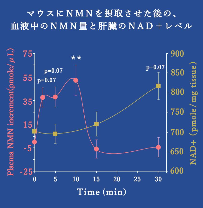マウスにNMNを摂取させた後の、 血液中のNMN量と肝臓のNAD+レベル
